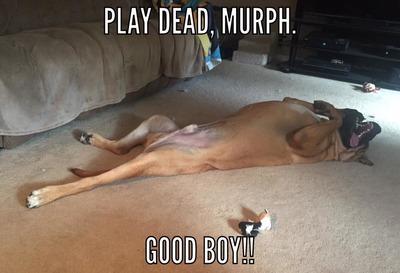 murphsleepy